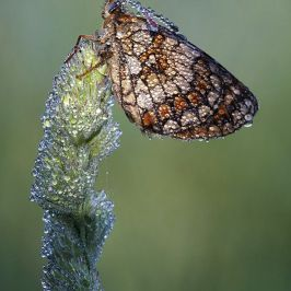 butterflyy.jpg